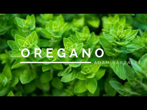 Oregano - The Oil Of Breakthroughs