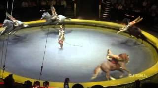 видео цирк на вернадском