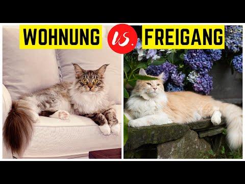 Wohnungshaltung Für Katzen   Tierquälerei Oder Unbedingt Nötig? (Was Ist Besser?)