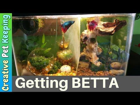 Petsmart petco fish haul new tank doovi for Petco betta fish price