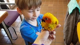 Маленький желтый попугайчик сидит на плече