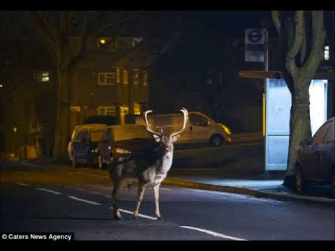 Wild Animals Inhabiting Urban Areas