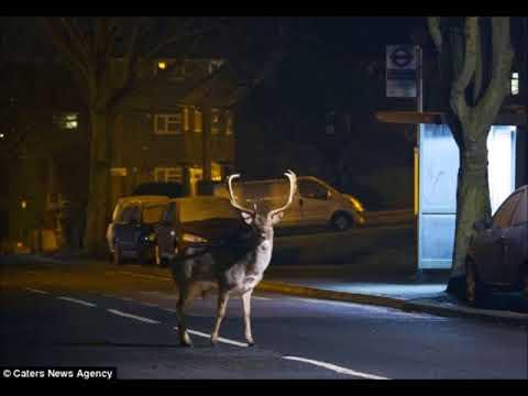 Wild Animals Inhabiting Urban Areas