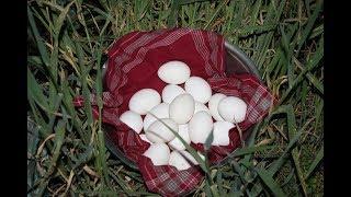 Особенности содержания кур несушек в зимний период.