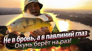 ЛАЗИМ ПО ДЖУНГЛЯМ в поисках окуня Рыбалка в запретном месте на басса Окунь павлиний глаз 2020 01