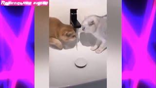 Смешные кошки и собаки ПРИКОЛЬНОЕ ВИДЕО