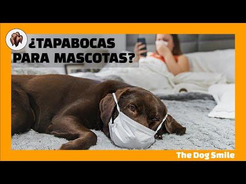 ¿TAPABOCAS PARA PERROS O GATOS? 🐶 ¿Los animales necesitan tapabocas para protegerse del Coronavirus?