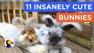11 INSANELY CUTE BUNNIES : Bunny Video Compilation | The Dodo Best Of