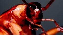 Most Common Cockroaches Found In Homes
