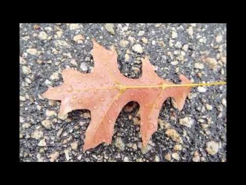 Autumn   The Strawbs