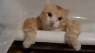 Животные приколы №5 (коты боятся воды)