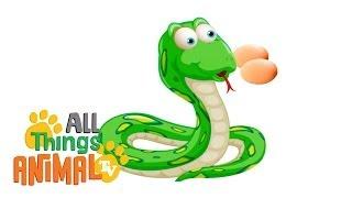 SNAKES: Animals for children. Kids videos. Kindergarten | Preschool learning