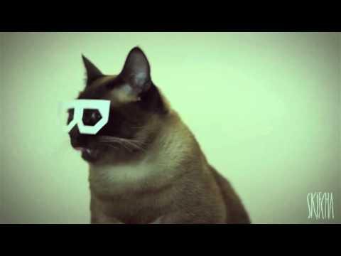 Dubstep Cat (stereo skifcha)