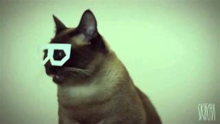 Dubstep Cat (stereo skifcha)