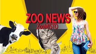 Корова живет в лесу с оленями и злая кошка | Новости из мира животных #19 | ZooMisto