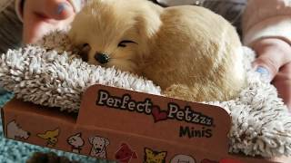 Perfect Petzzz Pets Mini Realistic Sleeping Dog Toy Review