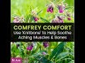 Use Comfrey to Soothe Muscles & Joints + Help Relieve Pain