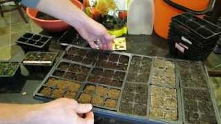 The Exact Details On When To How To Bottom Water Vegetable Plants Seed Starts In Trays TRG 2015