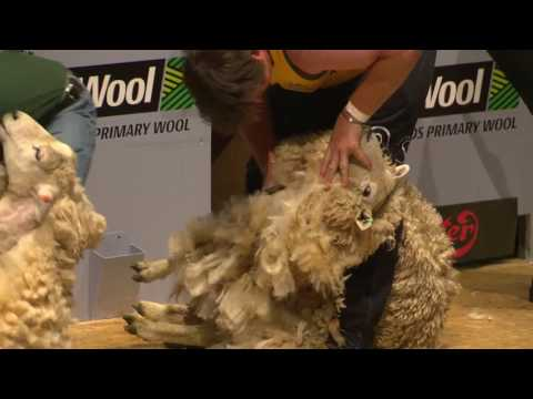World Blade Shearing Final
