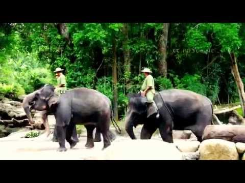 Funny Elephant Show in Asia