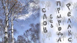 Берёзовый лес в Японии. Релакс. Природа. Видео без слов.