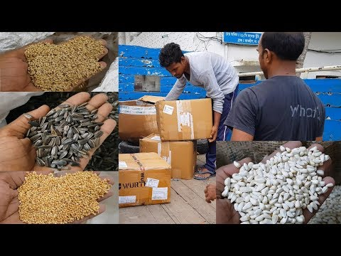 Seeds Foods For Birds Parrots / Mix Seeds Making / Parrots Seeds Purchase Buy Price