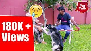 ස්වාමියාට පණ වගේ ආදරේ කරන ලංකාවේ හස්කි කෙල්ලගේ දඟ වැඩ | Pet Talk