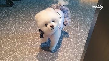 오래 살아야지.. 5성급 호텔에서 강아지를 환영해주는 날이 올 줄이야! 🏨 소노캄고양 투숙기
