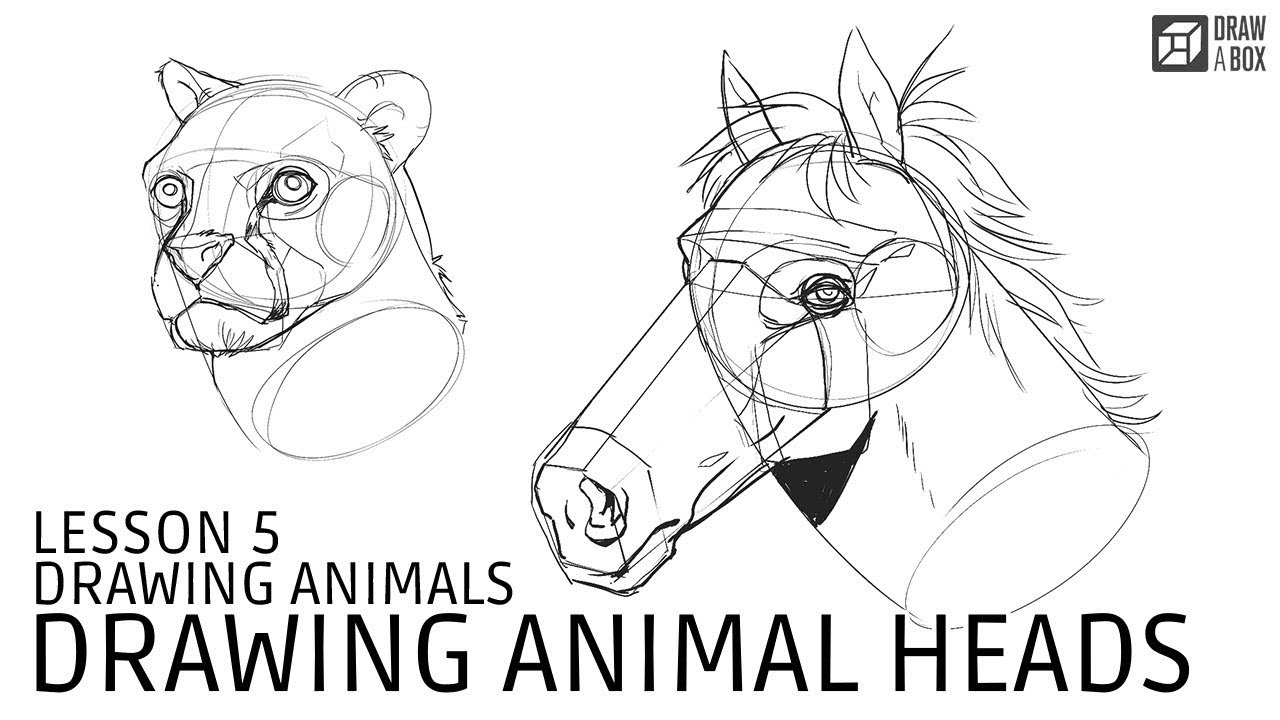 Drawabox Lesson 5, Drawing Animals: Drawing Animal Heads