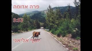 פרה אדומה - יוסף אליאני