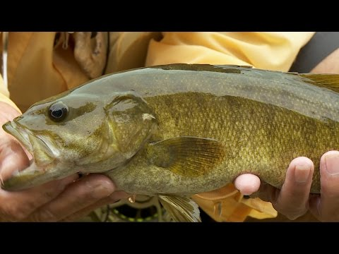 Crooked Creek Smallmouth