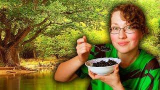 Что такое цельная растительная диета? || ЦРД || WFPB диета
