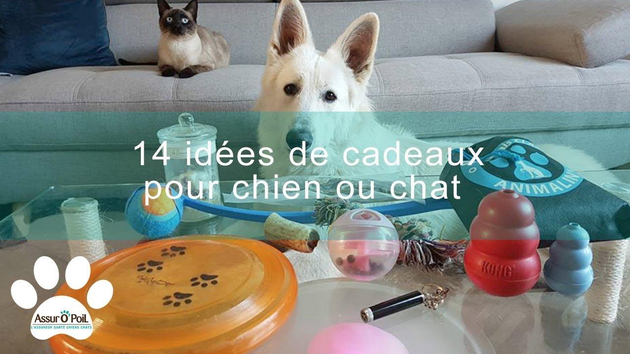 14 idées de cadeaux de Noël pour chien et chat | Assur O'Poil