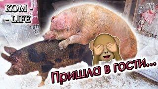 видео: СВАДЬБА ПО-СВИНСКИ И НОВЫЙ БИЗНЕС РУБЕНА