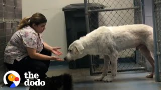 Woman Gains Trust Of A Giant, Feral Dog | The Dodo Faith = Restored