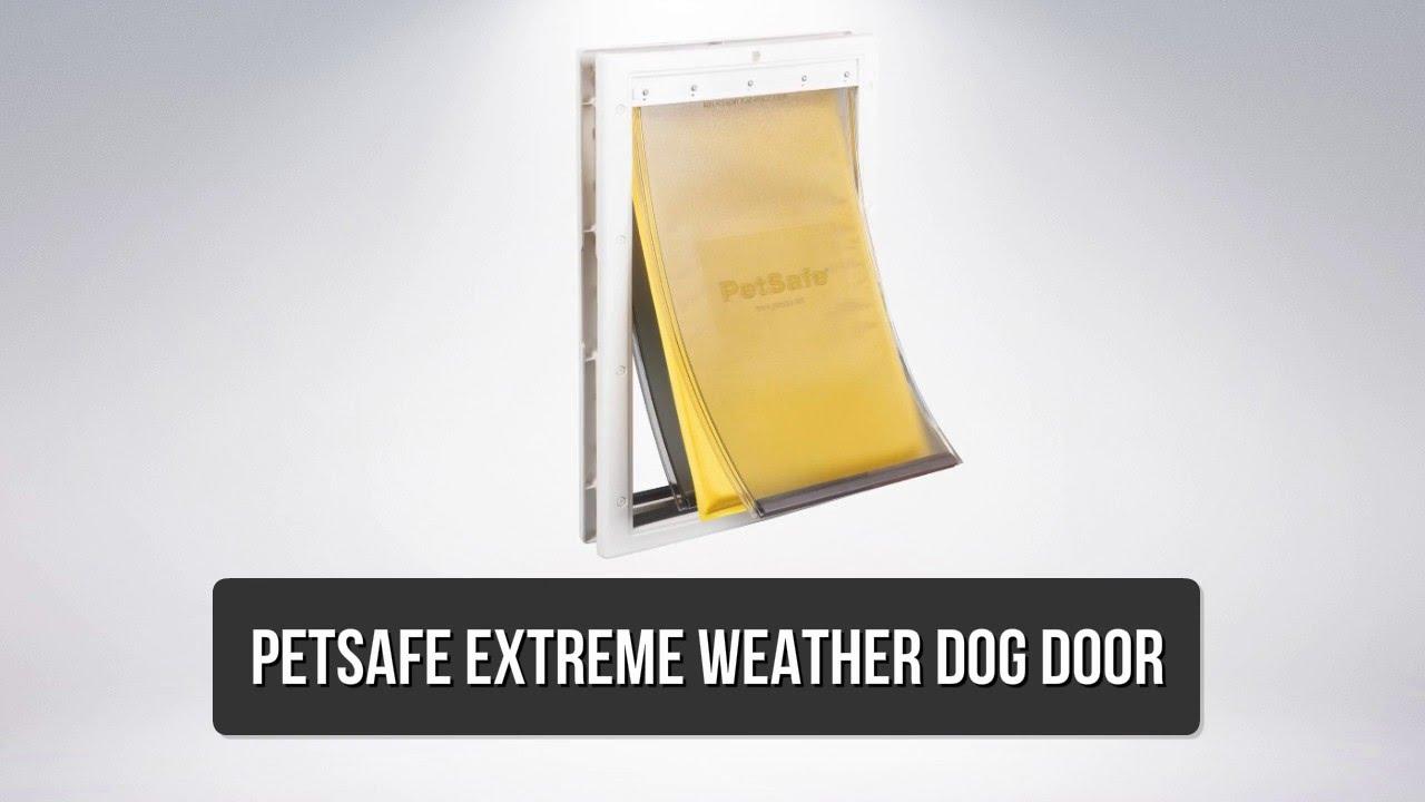 Best Dog Doors Top 8 Best Dog Doors Youtube