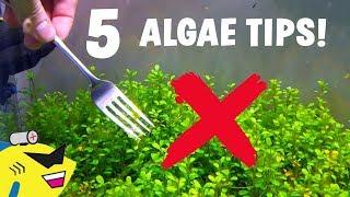 5 EASY TIPS To ELIMINATE ALGAE In Your Aquarium!