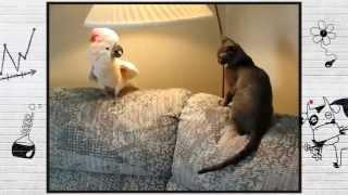 Попугай и чё и чё ?