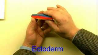 Medical embryology - Difficult concepts of early development.mp4