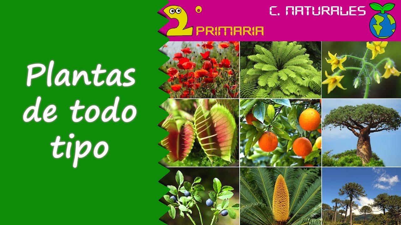 Ciencias de la naturaleza 2 primaria tema 5 for Clasificacion de las plantas ornamentales
