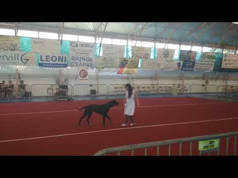 IV. Hatvani DaDo Dog Dancing verseny- Luna (hobby kezdő 1. hely)