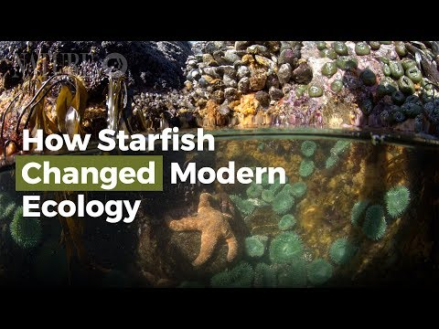 How Starfish Changed Modern Ecology