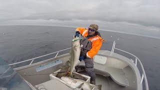 Палтус 60кг, треска и зубатка. Рыбалка в Норвегии. Весна 2016(Видеоотчет о рыбалке в Норвегии, остров Сероя. Апрель и Май 2016 года., 2016-07-02T15:21:16.000Z)