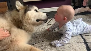 Baby Crawls To The Dogs For The First Time  (Cutest Reactions!!)