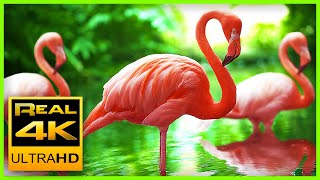 Breathtaking Colors of Nature in 4K 🌻🐦Birds & Flowers - Sleep Relax Meditation Music - 2 hours UHD