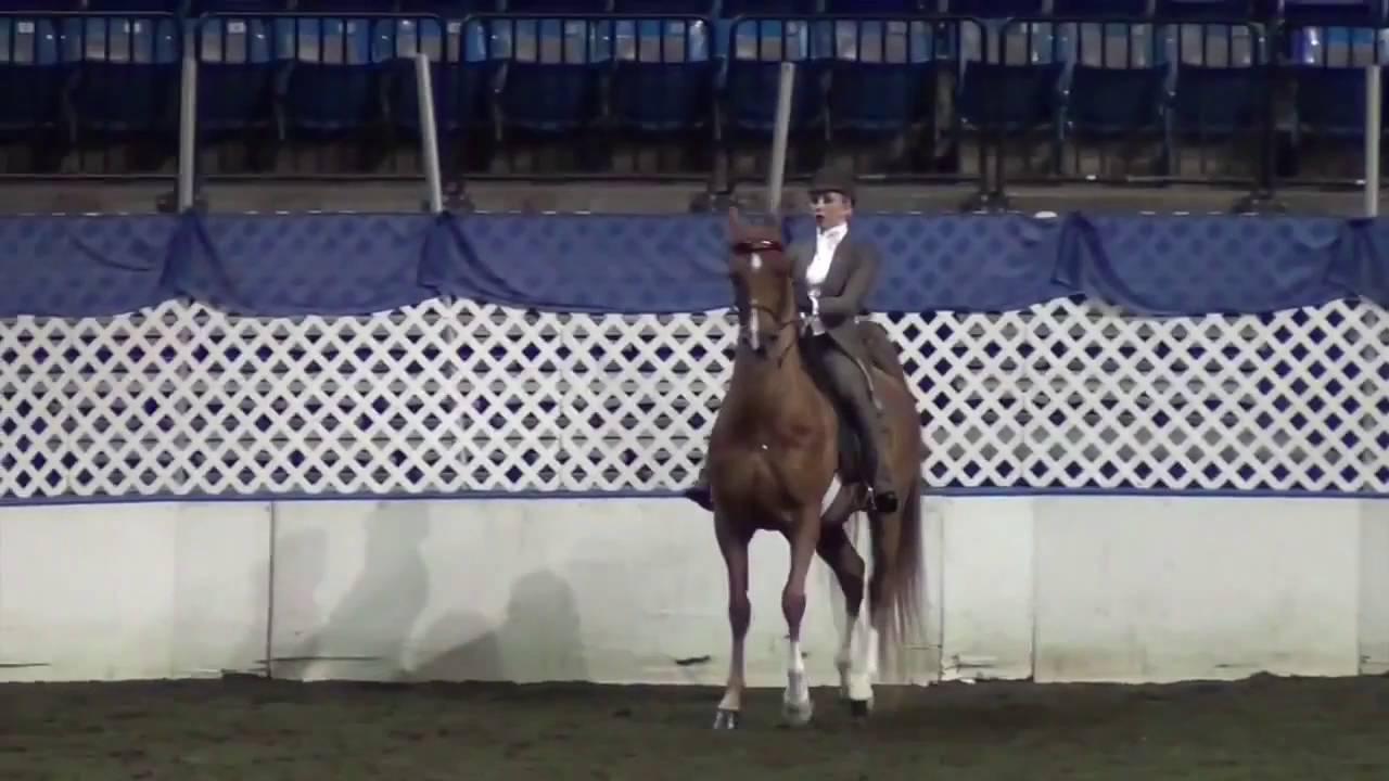 Saddle Seat Equitation A Test Of Horsemanship Youtube