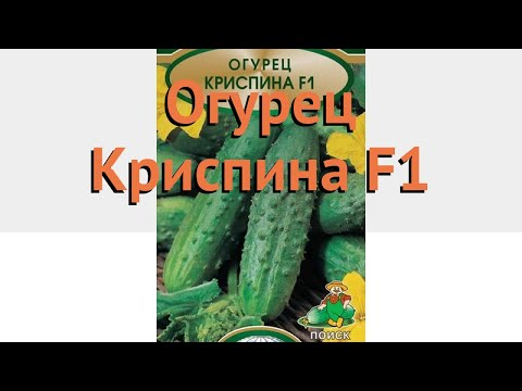 Огурец обыкновенный Криспина F1 (krispina f1) 🌿 обзор: как сажать, семена огурца Криспина F1