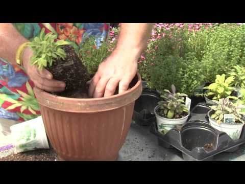 Cooking with Herbs May 17, 2015