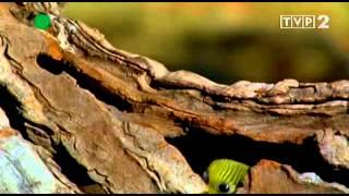 Australia - Królestwo papug