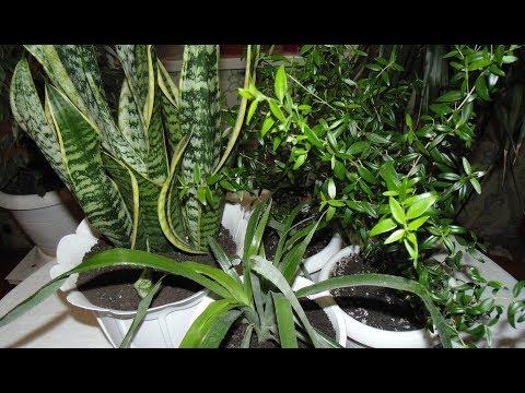 Лесная земля для комнатных растений.
